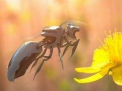 insetti a rischio estinzione-ecosistema e droni