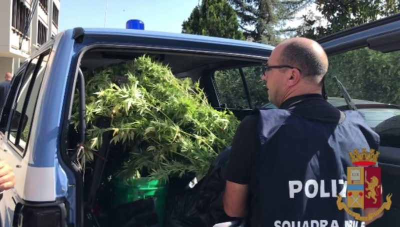 droni marijuana -2