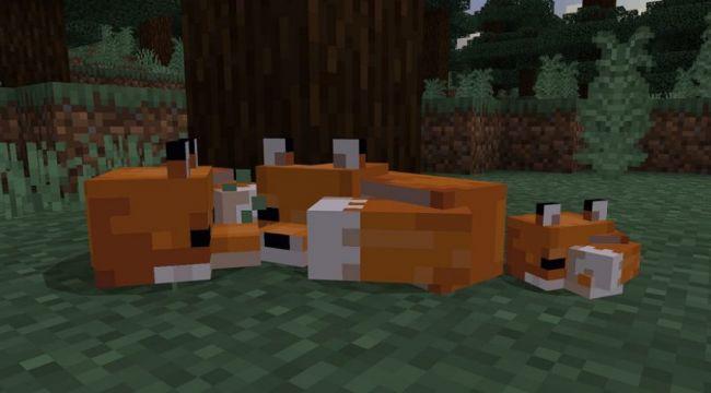 come addomesticare una volpe in minecraft