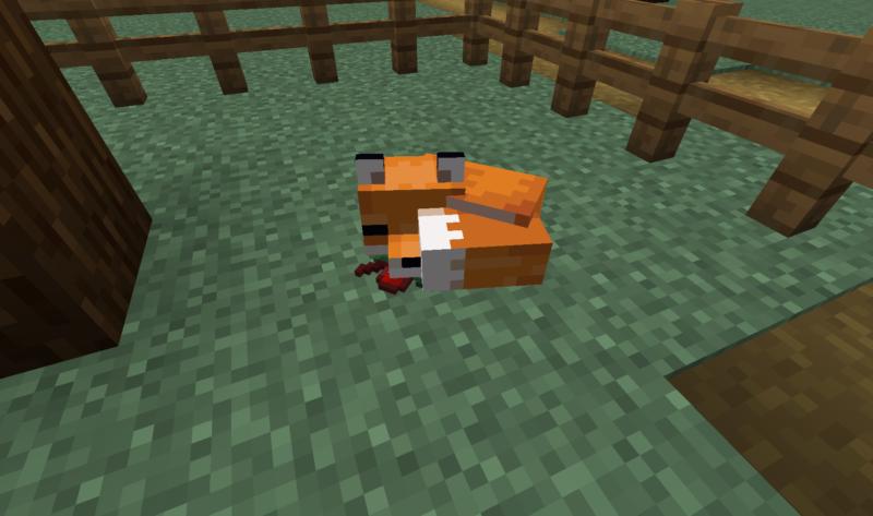 come addomesticare una volpe in minecraft -2